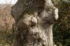 Trunk face | Surrey in Spring-16 (Paul Dykes) Tags: uk england tree nature countryside spring wildlife surrey bark april springtime polesdenlacey 2016 bole facesinthings facesinplaces