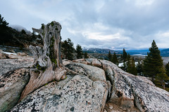 Stump (melfoody) Tags: mountain tree rock landscape stump granite sierras sierranevada rainbowbridge 1110 donnersummit