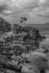 Stewart Island (die ganze foto sache) Tags: newzealand blackwhite hdr stewartisland canoneos7d lensbabysweet35 lensbabycomposerpro nikhdreffexpro2
