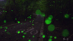 / Firefly with my ride a bike (Allen_2 ll YA_ ) Tags: light nature night canon photography 50mm lights fantastic long exposure shots country greeneyes shooting greenlight f18 firefly shooters liveshow  summernight                      1080phd       taiwanhualienature