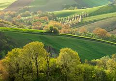 _DSC5094 (Giuseppe Cocchieri) Tags: trees color tree primavera alberi landscape countryside spring nikon colore campagna nikkor albero colori paesaggio