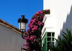 Callejuela (camus agp) Tags: ventana andalucia canoneos fachadas bougainvilleas callejuelas