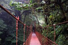 Monteverde (daniel_hinrichsen) Tags: travel bridge red cloud costa green tourism rain forest cool rica hike tropical monteverde mountians suspention