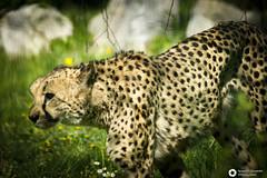 _DSC6167 (alessandro.spagnolli) Tags: zoo natura tamronlens naturalistica lecornelle parcofaunistico sonyalpha77