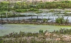 Cercas do serto (felipe sahd) Tags: water gua brasil landscape flora cear aude independncia cercas sertodecrates