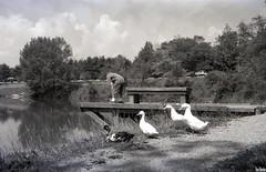 Shadow Lake 1998 (Thom Sheridan) Tags: old ohio bw vintage cleveland 1998 solon tommysheridan metroparks plaindealer thomsheridan