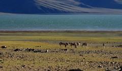 IMG_2367 (@Hao) Tags: tibet ngari