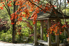 A beautiful morning HBM (Irina1010) Tags: light red canon garden bench japanesegarden spring maple japanesemaple monday redleaves hbm outstandingromanianphotographers gibbsgardens