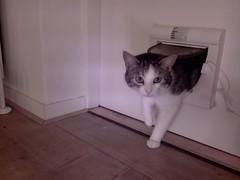 20160428-132809-i-1 (Catflap central) Tags: camera pet cats cat pi raspberry meow catdoor catflap kattenluik katzenklappe catflapj2nnl