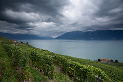 Le Lavaux et Le Chablais (Philippe Saire || Photography) Tags: sky mountain lake alps nature water field weather clouds montagne alpes canon landscape photography eos schweiz switzerland photo vines eau suisse wine mark swiss iii horizon farming champs culture lac wideangle ciel shore 5d vin usm fullframe nuages paysage lman vignes ff ef 1740mm rivage lavaux cokin littoral chablais f4l chexbres gnd8 p121s pleinformat philippesaire