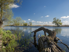 Spring is in the air (katrin glaesmann) Tags: trees clouds spring bluesky havel havelland