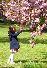 Des fleurs pour sa maman (Raymonde Contensous) Tags: nature arbres 94 valdemarne parcdesceaux cerisiersfleurs scnesdevie cerisiersenfleurs bosquetnord carrroseparcdesceaux