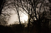 morning(not) (GeraldDeschain) Tags: trees moon night canon dark 50mm edited branches ukraine noflash darky chernivtsi chernovtsy canon650d canont4i geralddeschain