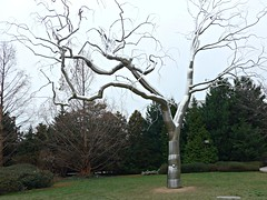 """""""Graft,"""" Stainless steel and concrete tree sculpture by Roxy Paine, National Gallery of Art (ali eminov) Tags: sculpture washingtondc artists museums sculpturegarden nationalgalleryofart outdoorsculpture sculptors roxypaine"""