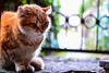 A random friend (Evangelos Pappas) Tags: nature cat orrange hallstatt