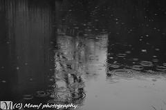 Raindrops (MAMF photography.) Tags: uk greatbritain england blackandwhite bw water monochrome rain sex photography canal photo blackwhite google nikon flickr image noiretblanc zwartwit unitedkingdom britain yorkshire united leeds january kingdom gb upnorth zwart pretoebranco schwarz westyorkshire flickrcom greatphoto googleimages enblancoynegro zwartenwit greatphotographers mamf inbiancoenero schwarzundweis nikond7100 mamfphotography