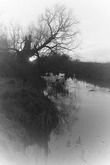 river (Timoleon Vieta II) Tags: uk sunset bw mist snow abstract tree water river x cambridgeshire notsnow timoleon