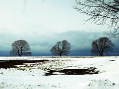 Three Trees One Crow (Roger Rua) Tags: blue trees winter sky snow clouds panasonic rhodeisland portsmouth crow aquidneckisland