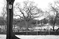 XT1-01-25-15-947 (a.cadore) Tags: nyc newyorkcity light blackandwhite bw zeiss landscape centralpark candid uptown lamppost fujifilm carlzeiss transverse xt1 zeissbiogon35mmf2 biogont235 fujifilmxt1