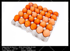 Egg in a carton (__Viledevil__) Tags: food brown chicken healthy raw box egg container eggs carton dairy product protection fragile groceries freshness eggcarton eggshell foodstuff ingredient uncooked dairyproduct