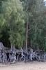 Roots (pburka) Tags: park tree beach hawaii sand state roots kauai kee haena