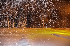 February 2-3 2016 Snowstorm (Dan's Storm Photos & Photography) Tags: winter snow nature weather outdoors snowstorm snowfall blizzard winterweather