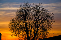 Tree at sunset (echumachenco) Tags: sunset sky tree silhouette clouds germany bayern deutschland bavaria evening branches april freilassing eveningpink nikond3100