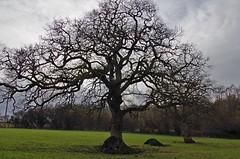 1217-29L (Lozarithm) Tags: landscape 1770 studley calne k50 treesshrubs smcpda1770mmf4alifsdm pentaxzoom