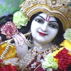 #Hare #Krishna #Iskcon #London #shringar #arti #live #www.mayapur.tv 12.2.16 (dishantbt051) Tags: london hare live www arti krishna iskcon shringar