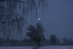 Isarauen with hoarfrost and moon (Bernhard_Thum) Tags: winter moon nature zeiss hoarfrost isar freising otus carlzeiss elitephotography landscapesdreams capturenature nikond800e distagonotus5514zf apodistagon1455zf2 apodistagon1455