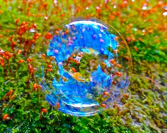 Multicoloured Moss (Pufalump) Tags: blue red orange macro green grass garden circle moss multicoloured bubble