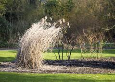 Where the Wind Blows (Hans van der Boom) Tags: nature netherlands reeds garden rotterdam wind nederland arboretum nl bent plumes trompenburg zuidholland honingerdijk