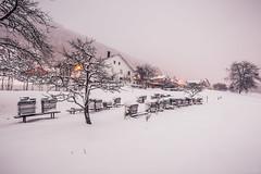 Snow island (Naska Photographie) Tags: mountain snow ski montagne la photo photographie hiver neige froid vosges photographe bresse naska photgraphie