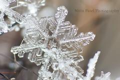 IMG_8897 (nitinpatel2) Tags: macro snowflakes patel nitin