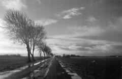 Regen und Land (Turikan) Tags: stand contax dev 100 tvs rodinal weite bäume apx regen pfützen agfaphto
