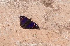 Argentinien_Insekten-65 (fotolulu2012) Tags: tierfoto
