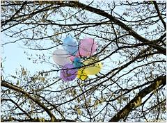 bunter Fruhling (mayflower31) Tags: tree spring ste baum farben frhling luftballon