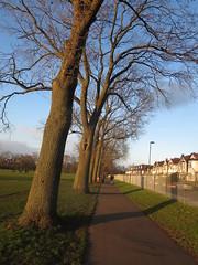 Ruskin Park (John Steedman) Tags: uk greatbritain england london unitedkingdom camberwell se5 grossbritannien   ruskinpark   grandebretagne