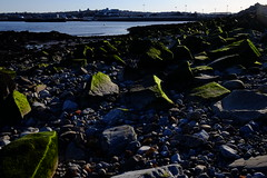 Low tide at Hulk Beach   112/366 (emrold) Tags: green rocks velvia bayoffundy tides saintjohn sooc day112366 xf23mmf14r fujifilmxt1 366the2016edition 3662016 21apr16