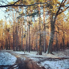 Untitled. 2015_t.t.a.b. - #winter #season has... (Tomski TTABOGRAPHY) Tags: trees winter snow forest season walks first poland ano tomski ttab treemagic uploaded:by=flickstagram igerspoland igerseurope instagram:photo=11254303357802932821484642177 klobuckcounty ttabography anoprojekt panatommedia