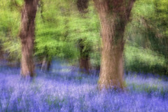 Spring Sensations (Tony Gill) Tags: flowers blue colour green leaves bluebells woodland spring movement woods senses impressionist icm intentionalcameramovement