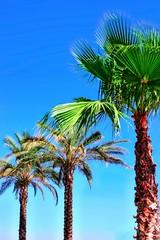 Image02 (Matdizar) Tags: trip travel summer color turkey