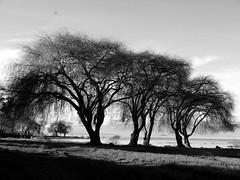 Lago Villarica. (N Javier Contreras) Tags: blackandwhite lago photo photos capture villarica airelibre