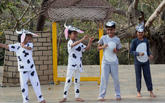 Swaying cow (Nagarjun) Tags: school play bangalore amphitheatre kanishka kinu kanakpuraroad thevalleyschool
