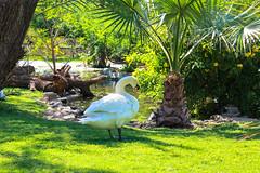 Duck (Ismail Photos) Tags: kuwait ahmadi