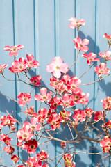 Spring colors (RichardWesner) Tags: life flowers blue red sunshine wonderful spring still