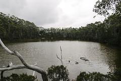 (a-e-m-e) Tags: autumn mountain lake colour nature water field leaves landscape nikon berries outdoor australia mount tasmania serene beech fagus pandani nikond600