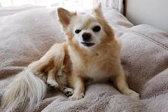 Fujifilm X70 : April 19 2016 (takuhitofujita) Tags: flickr 犬 動物 eyefi eyeficloud fujifilmx70