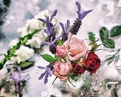 Floral Arrangement (Photos By Michi) Tags: pink stilllife white flower floral rose spring flora purple blossom lavender sage bloom snapdragon