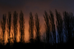 oh the trees (aniretak) Tags: blue autumn trees sunset sky orange netherlands contrast silhouete delft zuidholland